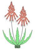 De bloempot van alo?vera Bloempotbloei, rode bloem Mooie geneeskrachtige installatie Vector illustratie stock illustratie