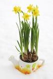 De bloempot van de gele narcis in sneeuw Stock Afbeeldingen