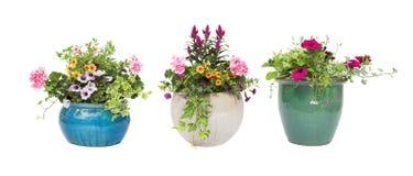 De bloempotten van de Zomer van de lente die op wit worden geïsoleerdh Royalty-vrije Stock Foto's