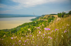 De bloemrijke van de het Plattelandsrivier van het Zonsondergangpanorama Groene Zomer Roemenië Stock Afbeelding