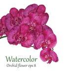 De bloemvector van de orchideewaterverf Royalty-vrije Stock Afbeelding