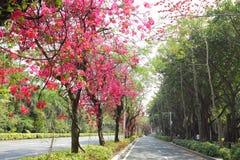 De bloemweg van China royalty-vrije stock afbeeldingen