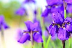 de bloemzomer Stock Foto