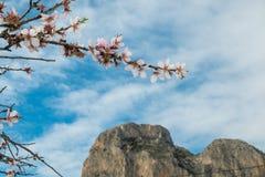 De bloesem van de amandelboom in Costa Blanca, Spanje Royalty-vrije Stock Fotografie