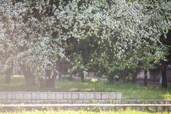 De bloesem van Apple in de lente Stock Afbeeldingen