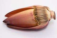 De bloesem van de banaanbloem als heerlijke die groente wordt op witte achtergrond wordt geïsoleerd gegeten die stock fotografie