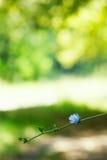 De bloesem van de bloem op vage groene achtergrond Royalty-vrije Stock Fotografie
