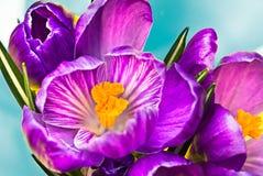 de bloesem van de bloembloei Royalty-vrije Stock Foto