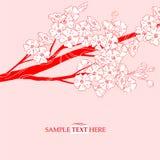 De bloesem van de de kersentak van Japan Stock Fotografie
