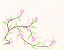 De bloesem van de kers in de lente Royalty-vrije Stock Fotografie