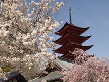 De bloesem van de kers met pagode Royalty-vrije Stock Afbeelding