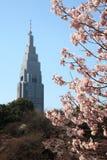 De bloesem van de kers in Tokyo, Japan - Maart 2010 Royalty-vrije Stock Foto's