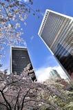 De bloesem van de kers in Vancouver Van de binnenstad Stock Foto's