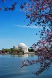 De Bloesem van de kers, Washington DC Royalty-vrije Stock Afbeeldingen