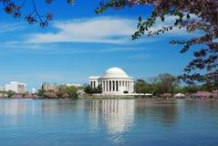 De Bloesem van de kers in Washington DC stock afbeeldingen