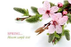 De mooie bloesem border isolated van sakura van de lente op wit