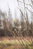 De Bloesem van de lente Royalty-vrije Stock Foto's