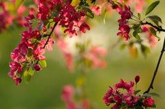 De Bloesem van de lente Royalty-vrije Stock Afbeelding