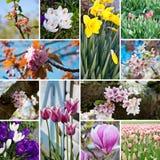 De bloesem van de lente bloeit collage Royalty-vrije Stock Afbeelding