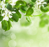 De bloesem van de lente - bloemengrens Stock Foto