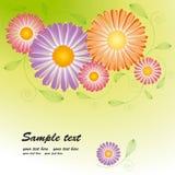 De bloesem van de lente met kleurrijk madeliefje stock illustratie