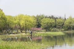 de bloesem van de waterkantperzik en groene boom Stock Afbeelding