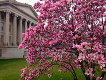 De bloesem van de kers in Washington DC royalty-vrije stock afbeelding
