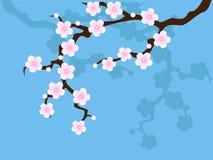 De bloesem van Sakura op blauw Stock Fotografie