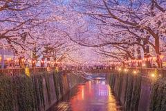 De bloesem van de sakurakers van Tokyo met omhoog licht stock foto's
