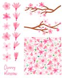 De bloesem vectorreeks van de de lentekers Geïsoleerde Sakura stock illustratie