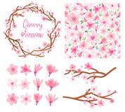 De bloesem vectorreeks van de de lentekers Geïsoleerde Sakura royalty-vrije illustratie