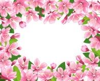 De bloesemachtergrond van de kers De roze lente bloeit kader De vectorillustratie van de beeldverhaalstijl Stock Afbeeldingen