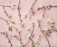 De bloesembloemen van de de lenteamandel over lichtrose achtergrond Royalty-vrije Stock Afbeelding