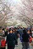 De bloesemfestival van de kers van Peking royalty-vrije stock fotografie