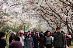 De bloesemfestival van de kers van Peking Stock Afbeeldingen