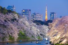 de bloesemlicht van de sakurakers omhoog en de Toren van Tokyo Royalty-vrije Stock Afbeeldingen