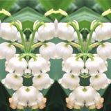 De bloesempatronen van de de lentebloem royalty-vrije stock foto's