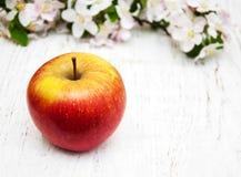 De bloesems van Apple en van de appelboom Royalty-vrije Stock Foto