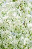 De bloesems van de appel in de lente over de hemel royalty-vrije stock fotografie