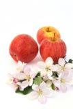 De bloesems van de appel en van de aplle-boom Royalty-vrije Stock Afbeeldingen