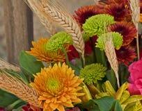 De Bloesems van de herfst Royalty-vrije Stock Fotografie
