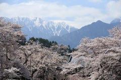 De Bloesems van de kers bij tempel Jissouji Royalty-vrije Stock Foto's
