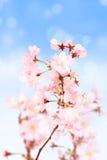 De bloesems van de lente Stock Foto's