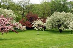 De bloesems van de lente   Stock Fotografie