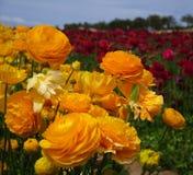 De Bloesems van de lente royalty-vrije stock afbeeldingen