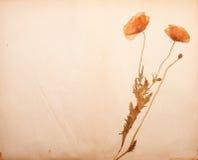 De bloesems van de papaver op papier stock fotografie