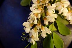 De Bloesems van de sprinkhanenboom Stock Foto