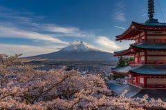 De bloesems van de kers in Japan stock foto