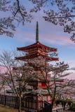 De bloesems van de kers in Japan stock foto's