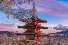 De bloesems van de kers in Japan royalty-vrije stock foto's